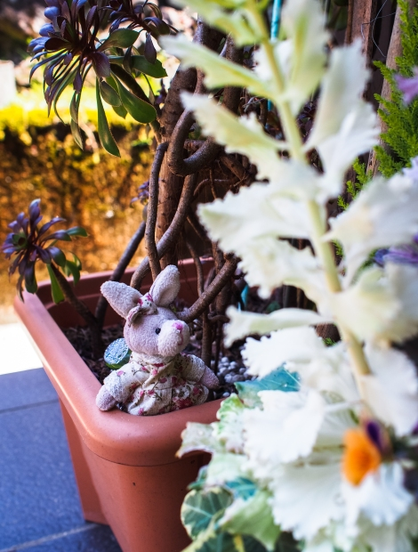 rabbit: aren't my flowers pretty?