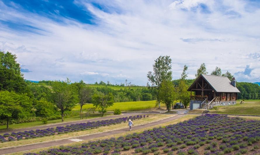 lavendar field from observatory
