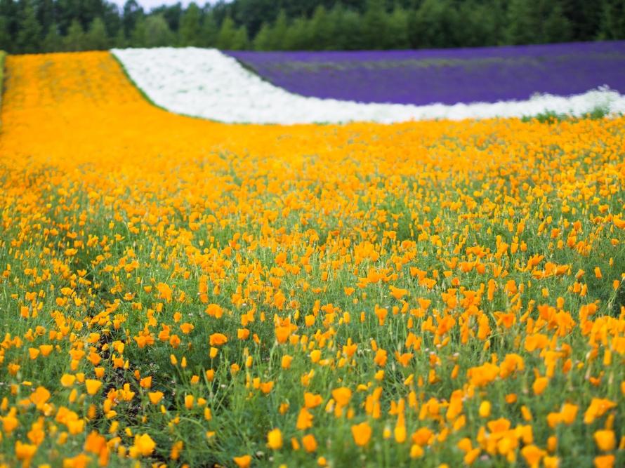 a yellow hue