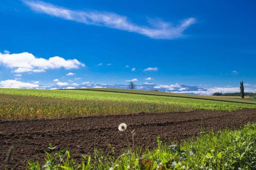 secret field at bibaushi