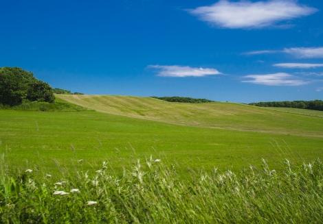 beautiful green pasture