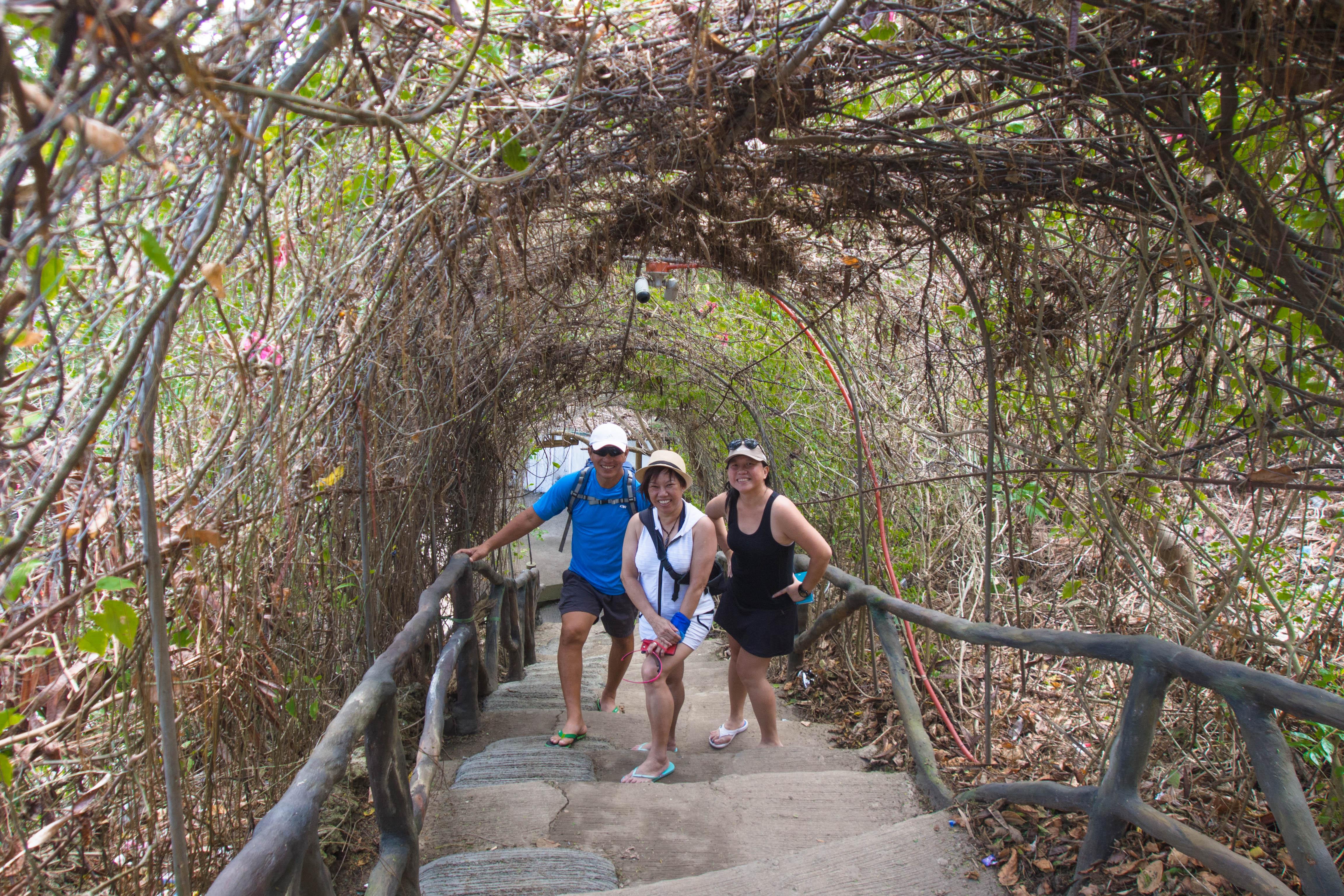 vine covered stairways