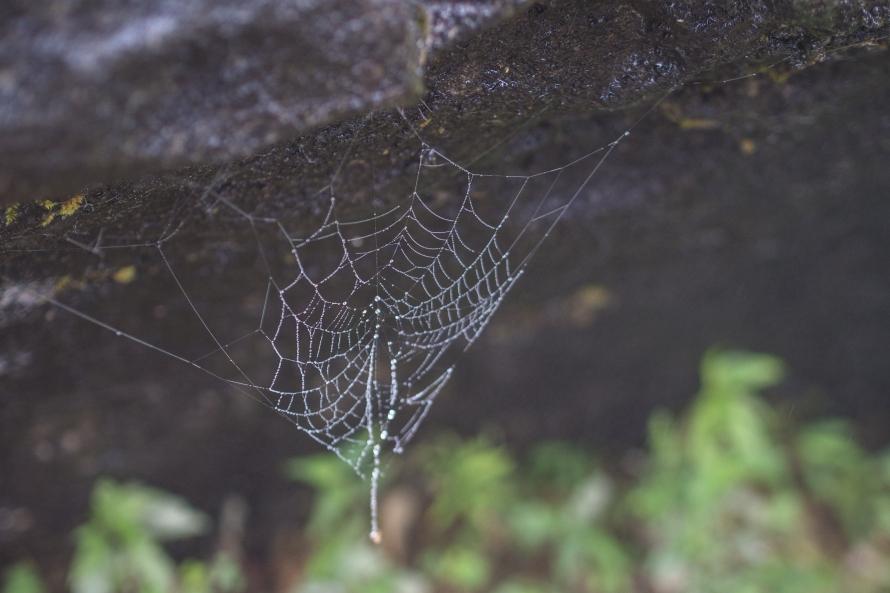 spidey's web
